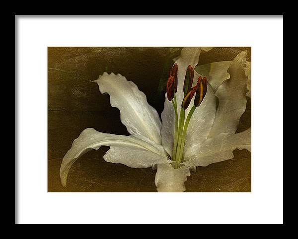 Lily Framed Print featuring the photograph Vintage Lily by Richard Cummings
