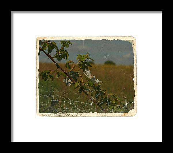 Framed Print featuring the photograph Vintage Rose by Carol Hynes