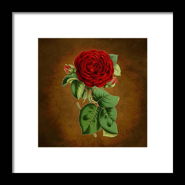 Abstract Framed Print featuring the digital art Vintage Rose Reflections by Sheila Savage
