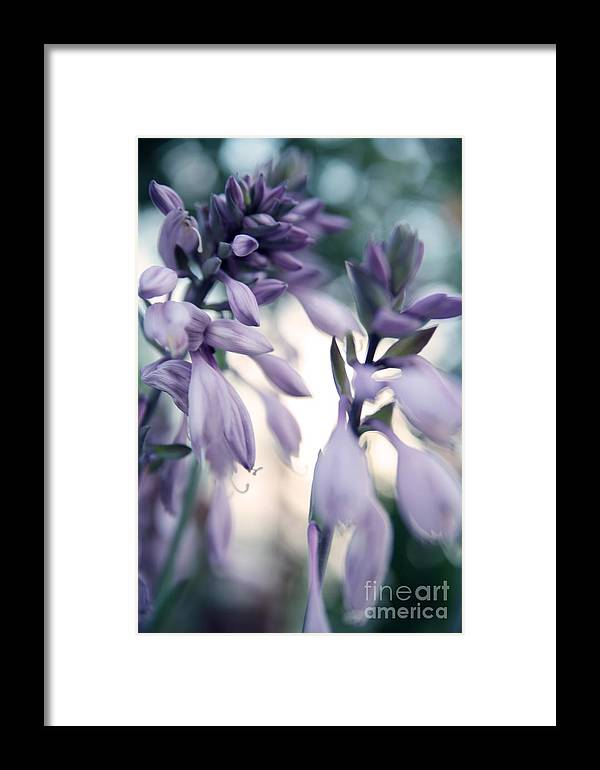 Abstract Framed Print featuring the photograph Violet by Ekaterina Planina