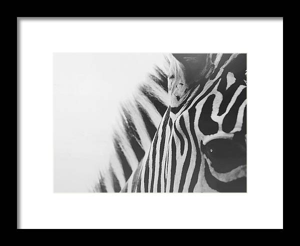 Black And White Framed Print featuring the photograph Visions by Carrie Ann Grippo-Pike