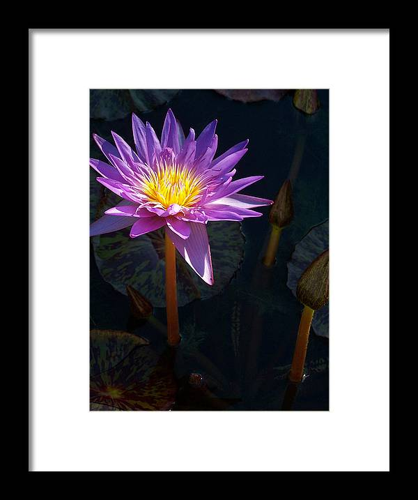 Aquatic Framed Print featuring the photograph Vivid Imagination by Debbie Fieno