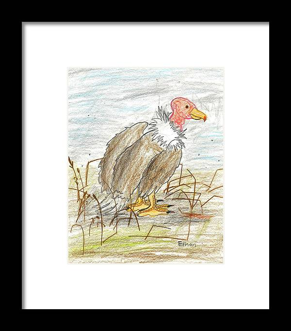 Vulture Framed Print featuring the drawing Vulture by Ethan Chaupiz