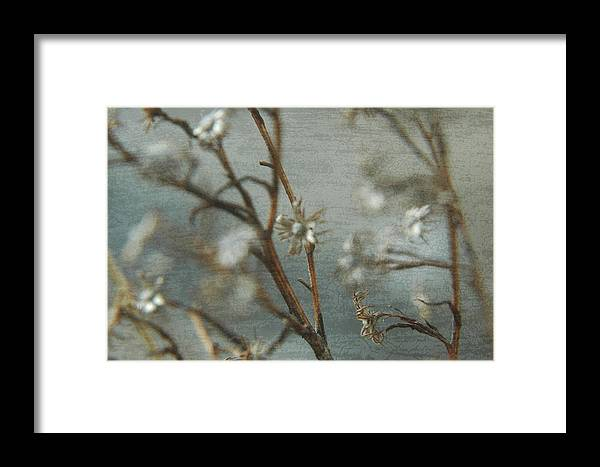 Flowers Framed Print featuring the photograph Waiting For Spring 1 by Rhonda Barrett