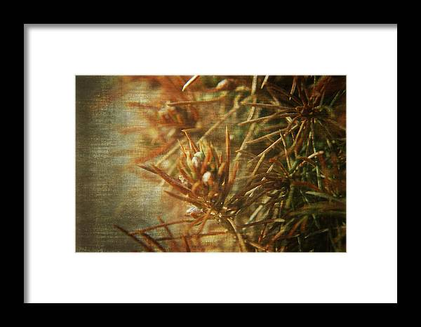 Macro Framed Print featuring the photograph Waiting For Spring 2 by Rhonda Barrett