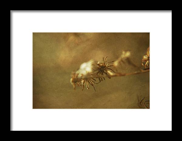 Textured Framed Print featuring the photograph Waiting For Spring 5 by Rhonda Barrett