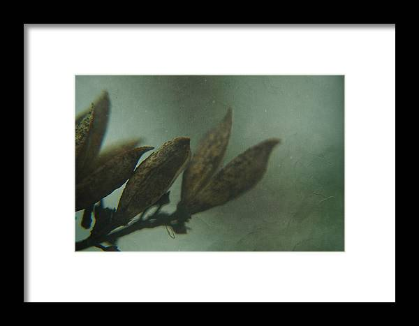 Nature Framed Print featuring the photograph Waiting For Spring 6 by Rhonda Barrett