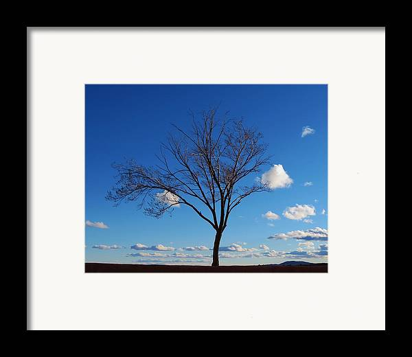 Tree Framed Print featuring the photograph Waiting For Spring by Feva Fotos