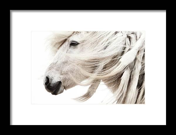 Wind Framed Print featuring the photograph Waiting For Spring by Gigja Einarsdottir