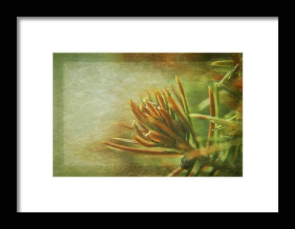 Botanical Framed Print featuring the photograph Waiting For Spring 3 by Rhonda Barrett