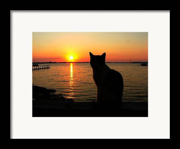 Cats Framed Print featuring the photograph Waiting For The Shrimpers To Come In With Their Catch by Julie Dant