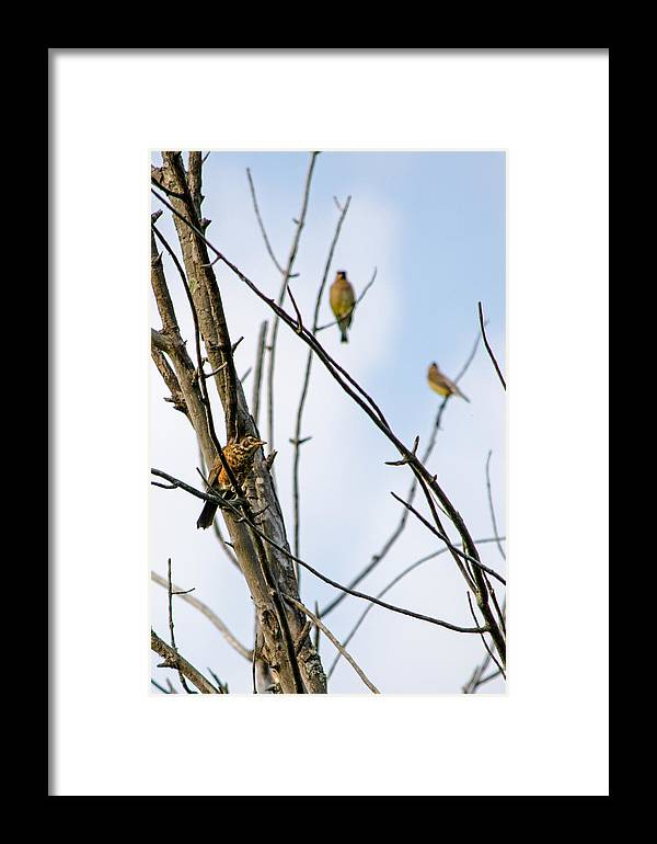 Birds Framed Print featuring the photograph Waiting Game by Susan McMenamin