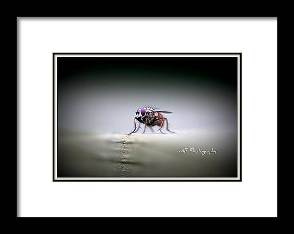 Macro Framed Print featuring the photograph Waiting by Michaela Preston