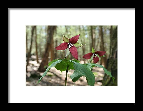 Wake Robin Framed Print featuring the photograph Wake Robin Pair by Neal Eslinger