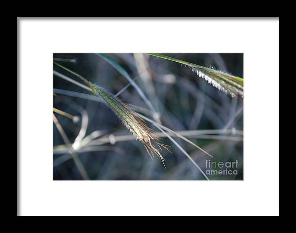 Close Up Framed Print featuring the photograph Walking In Wind by M E Wood