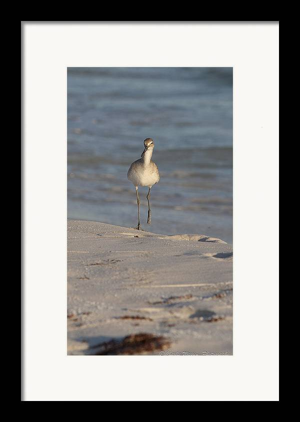 Beach Framed Print featuring the pyrography Walking Tall by Charles Warren
