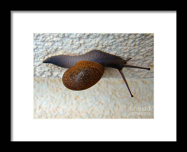 Garden Snail Framed Print featuring the photograph Wall Snail 2 by Nancy L Marshall