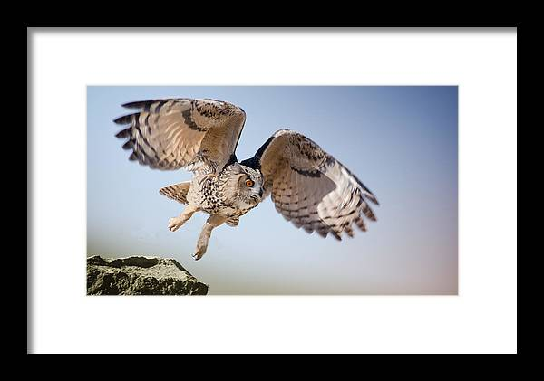 African Eagle Owl Framed Print featuring the photograph Wally by Janis Knight
