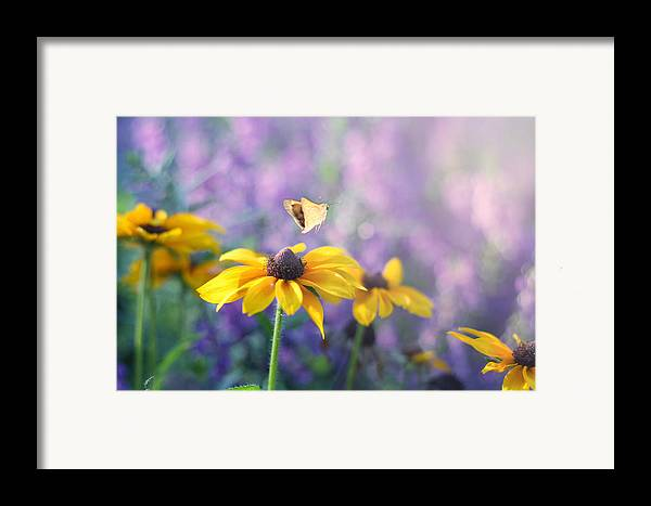 Butterflies On Flowers Framed Print featuring the photograph Wanderlust by Amy Tyler