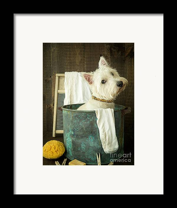 Dog Framed Print featuring the photograph Wash Day by Edward Fielding