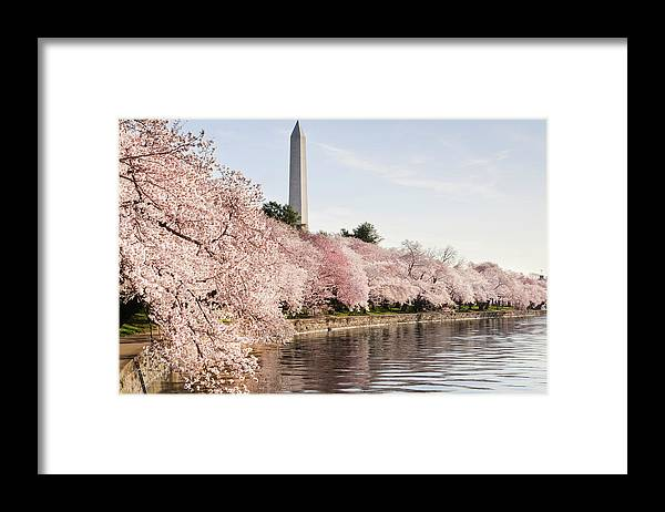 Tidal Basin Framed Print featuring the photograph Washington Dc Cherry Blossoms And by Ogphoto