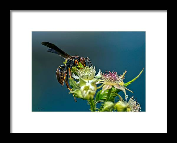 Wasps Framed Print featuring the photograph Wasp by Bob Orsillo