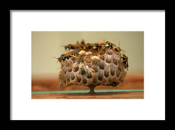 Wasp Framed Print featuring the photograph Wasp Hotel by Jeri lyn Chevalier