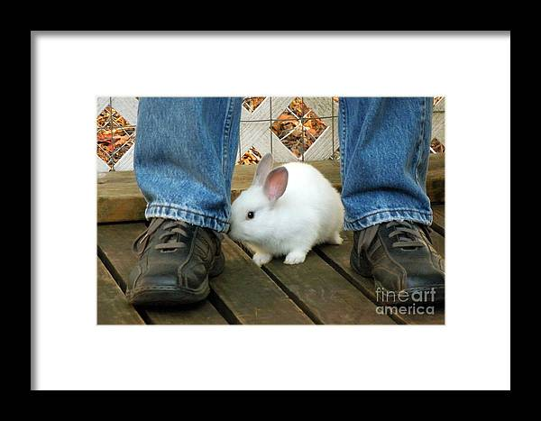 Rabbit Framed Print featuring the photograph Watch Your Step by Renee Trenholm