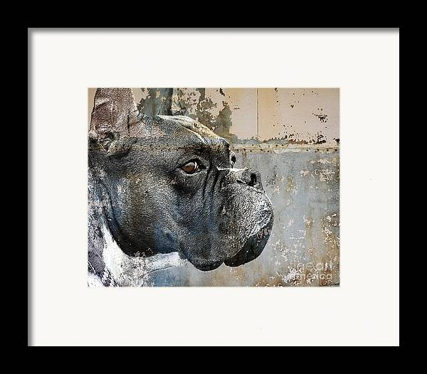 Dog Framed Print featuring the digital art Watchful by Judy Wood