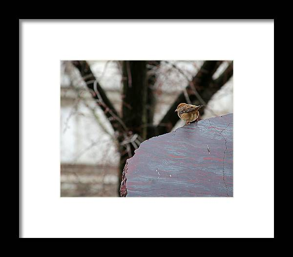 Bird Framed Print featuring the photograph Watching The People by Glenn Woodell