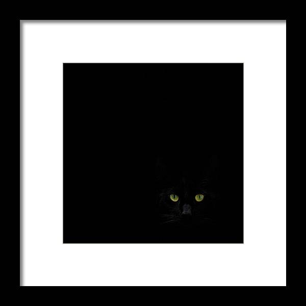 Cat Framed Print featuring the photograph Watching You From The Dark Side by Dirk Heckmann