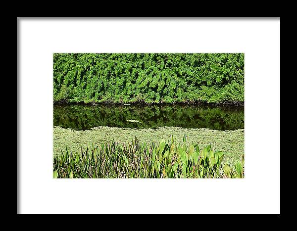 Florida Framed Print featuring the photograph Water And Green by Robert VanDerWal