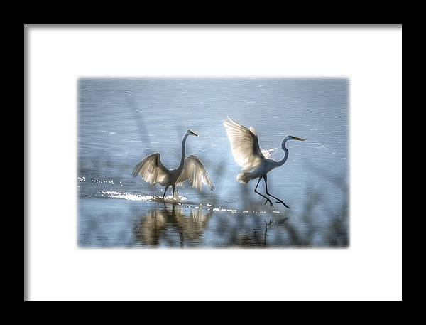 White Egret Framed Print featuring the photograph Water Ballet by Saija Lehtonen