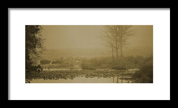 Water Buffalo Framed Print featuring the photograph Water Buffalo And Egret by Frank Feliciano