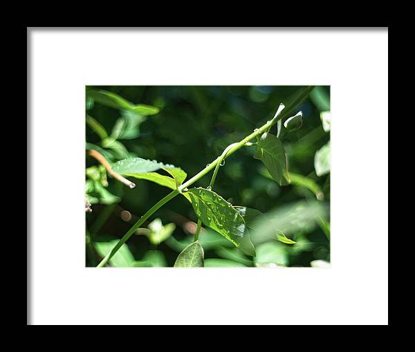 Water Framed Print featuring the photograph Water Droplets #1 by Philip G