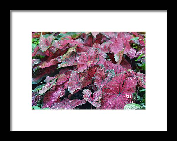 Sandra Framed Print featuring the photograph Water Drops by Lee Hartsell