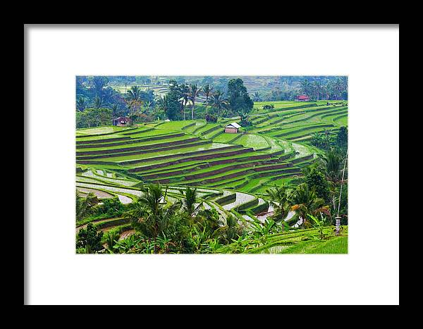 Agriculture Framed Print featuring the photograph Water-filled Rice Terraces, Bali by Keren Su