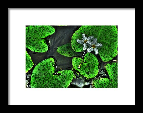 Flowers Framed Print featuring the photograph Water Flowers by Shannon Scott