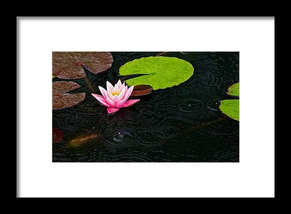 Flowers Framed Print featuring the photograph Water Lily And Raindrops by Craig Caldwell