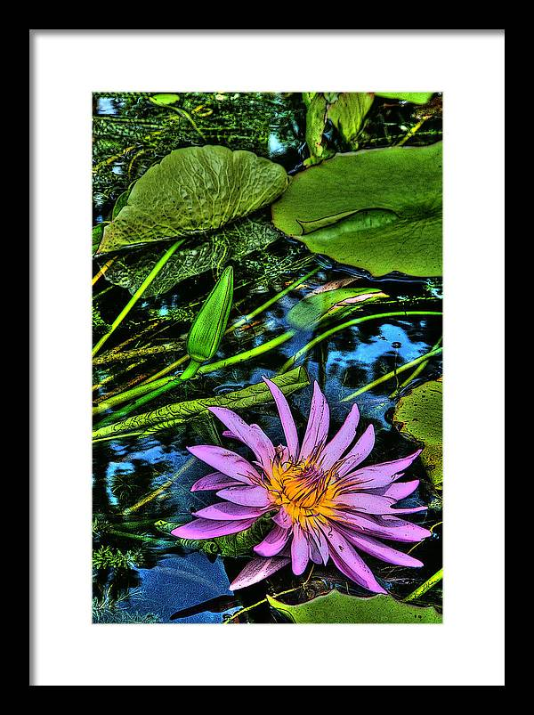 Flowers Framed Print featuring the photograph Water Lily by Shannon Scott