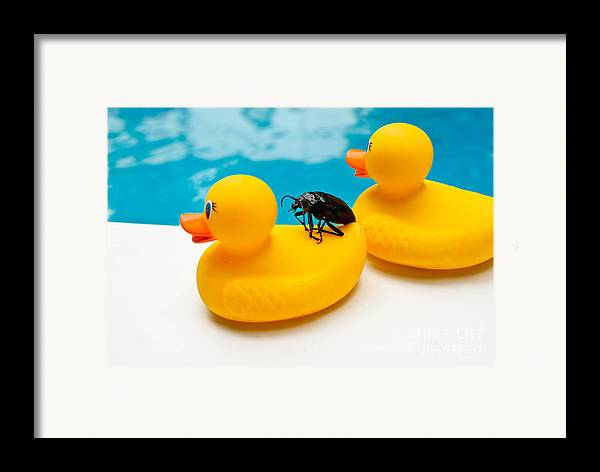 Absurd Framed Print featuring the photograph Waterbug Takes Yellow Taxi by Amy Cicconi