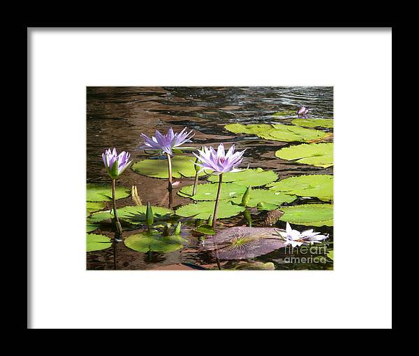 Landscape Framed Print featuring the photograph Waterlilies-purple by Lynn Hall