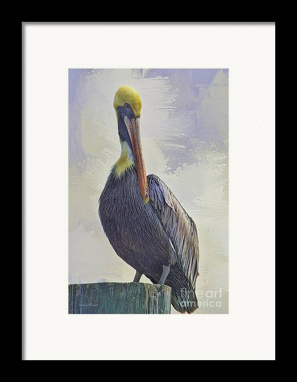 Pelican Framed Print featuring the photograph Waterway Pelican by Deborah Benoit