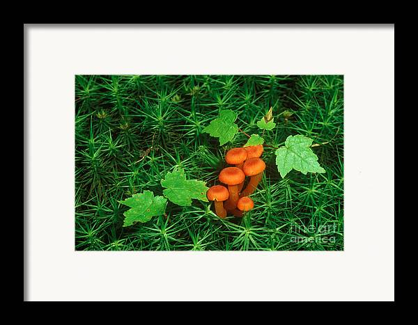 Waxy Cap Framed Print featuring the photograph Wax Cap Fungi by Jeff Lepore