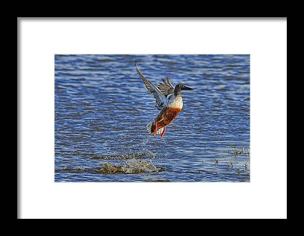 Liftoff Framed Print featuring the photograph We Have Liftoff by Gary Holmes