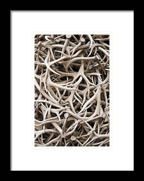 Abstract Framed Print featuring the photograph Weathered Elk Antlers by Gene Norris