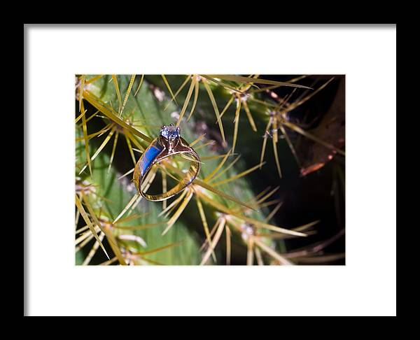 Cactus Framed Print featuring the photograph Wedding Ring On A Spine 2 by Douglas Barnett