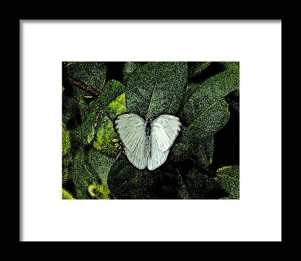 Watercolor Framed Print featuring the photograph West Virginia White Ins 47 by G L Sarti