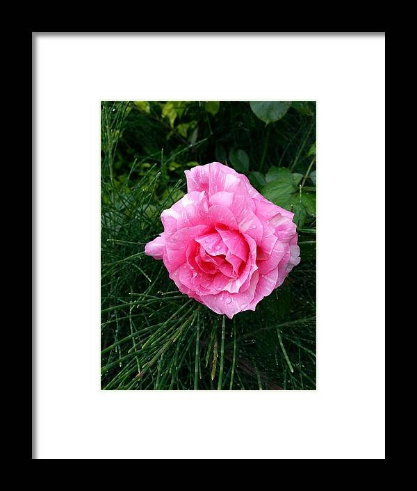 Flowers Framed Print featuring the photograph Wet Beauty by Abhishek Tiwary