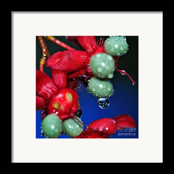 Photography Framed Print featuring the photograph Wet Berries by Kaye Menner